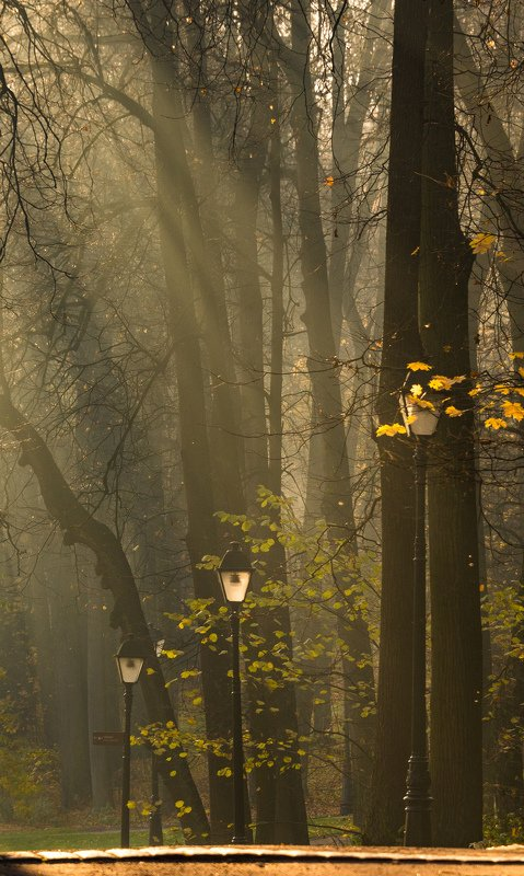парк, туман, солнечные лучи, утро Осенний паркphoto preview