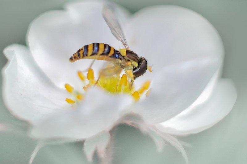 Цветок клубникиphoto preview