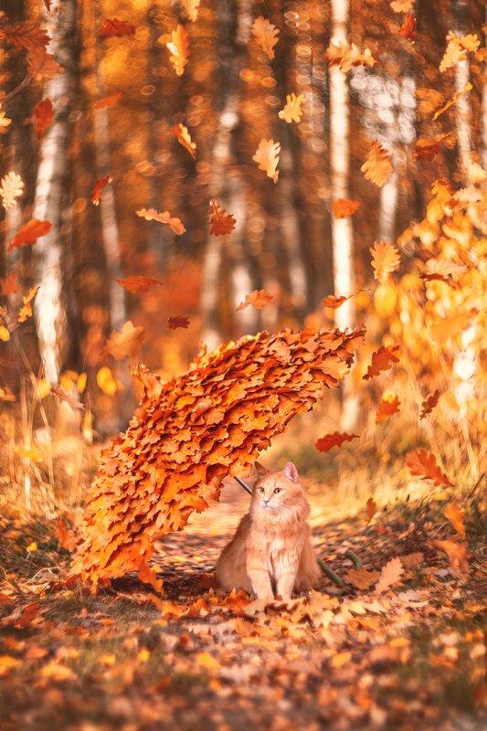 осень, кот, зонт, дуб, сезон, животное, pet, cat, autumn, москва Осенний котphoto preview
