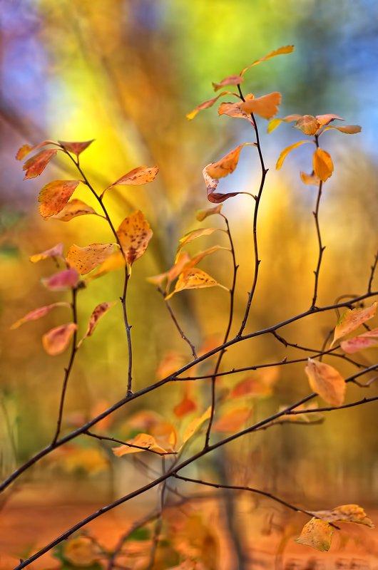 art, artwork, autumn, color, colors, color-image, leaf, leaves, nature, photography, Coloursphoto preview