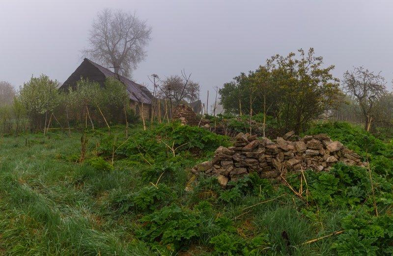 pskov, pleskau, псков, landscape, pskovregion, утро, туман, деревня д. Копаницыphoto preview