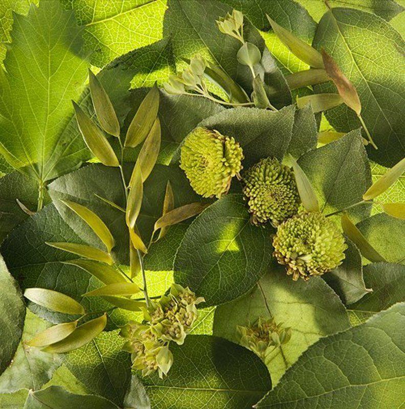 зеленный, цветы *photo preview
