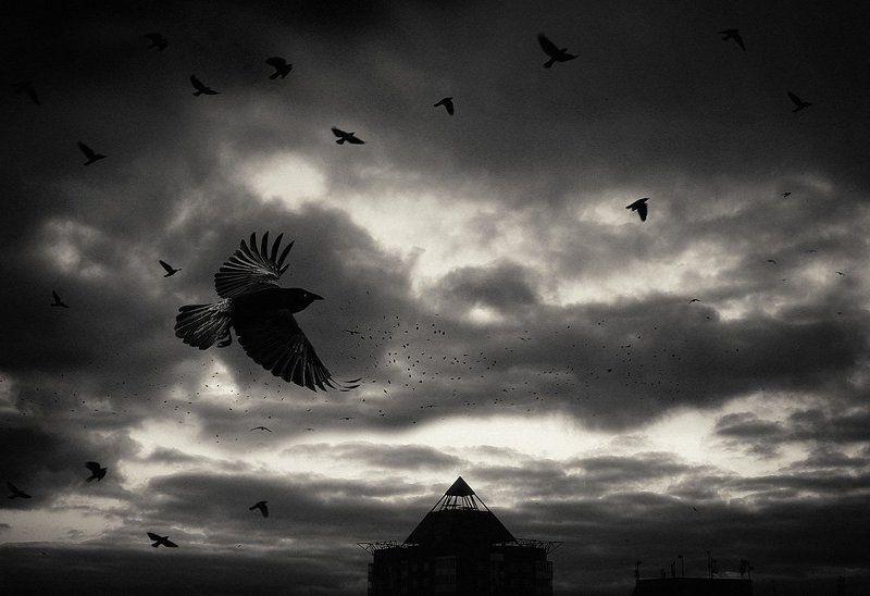 вороны, небо Вороныphoto preview