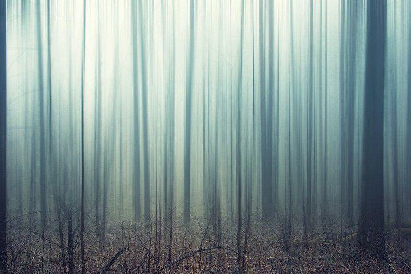 россия, пейзаж, лес, туман, трава, дерево, утро, dyadyavasya Заколдованный лесphoto preview