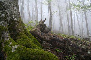 Страж леса...