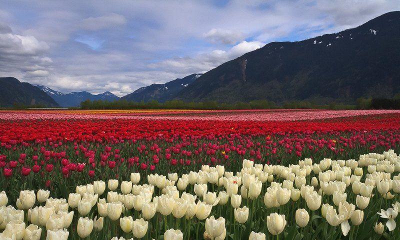 Зайдите на цветы взглянуть...photo preview