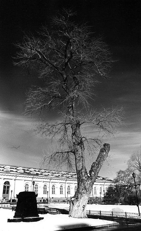 александровский сад, дерево, манеж, ручная печать print0photo preview