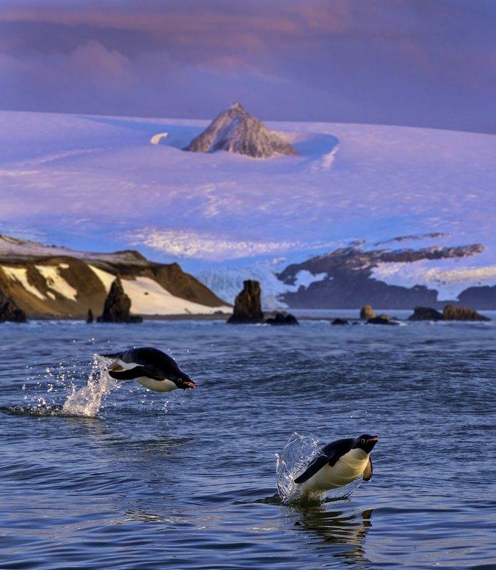 Spirit of Antarcticaphoto preview
