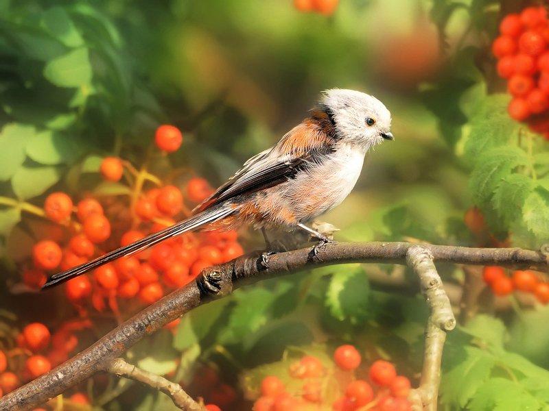 природа, фотоохота,  птицы, животные, осень Защитники нашего садаphoto preview