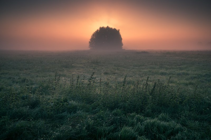 morning, sunrise, tree, meadow, foggy, sun, grass, minimalism, nature, landscape, A new day is waking upphoto preview