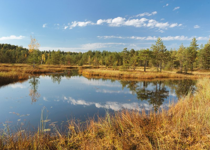 Осень на болотахphoto preview
