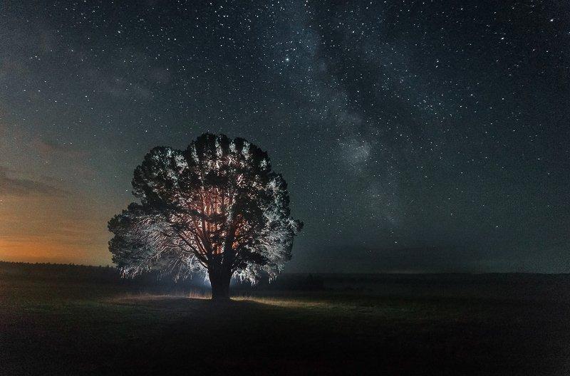 300 летняя сосна, Большой Кияик, Удмуртия, дерево, реликтовая сосна, сосна, млечный путь, млечный путь и дерево, космос 300 летняя сосна под вечным небом.photo preview