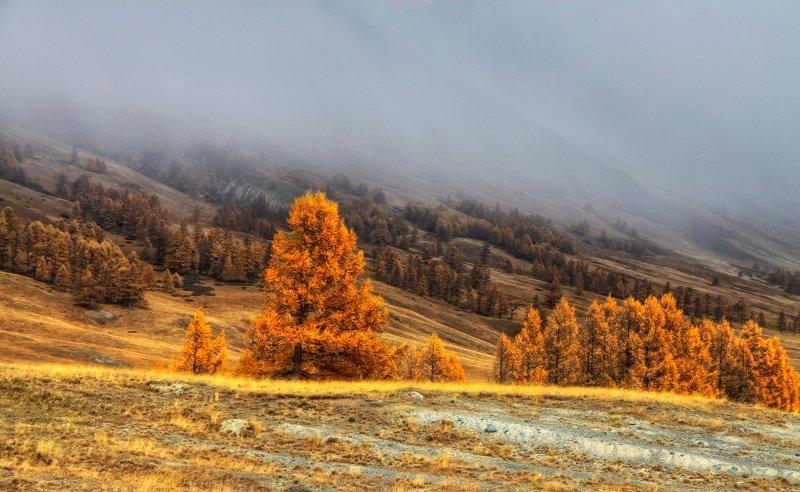 алтай, горный алтай, горы, сибирь, джазатор Спускается мглаphoto preview