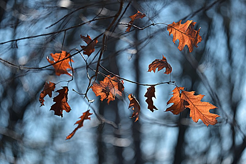 art, art-image, autumn, bokeh, color, colors, color-image, image, impression, leaf, leaves, nature, photography, picture, Autumn Impressionphoto preview