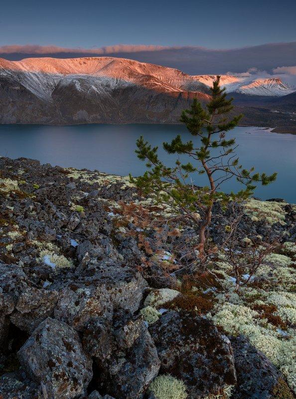 хибины,пейзаж,озеро,снег,рассвет,дерево,природа photo preview