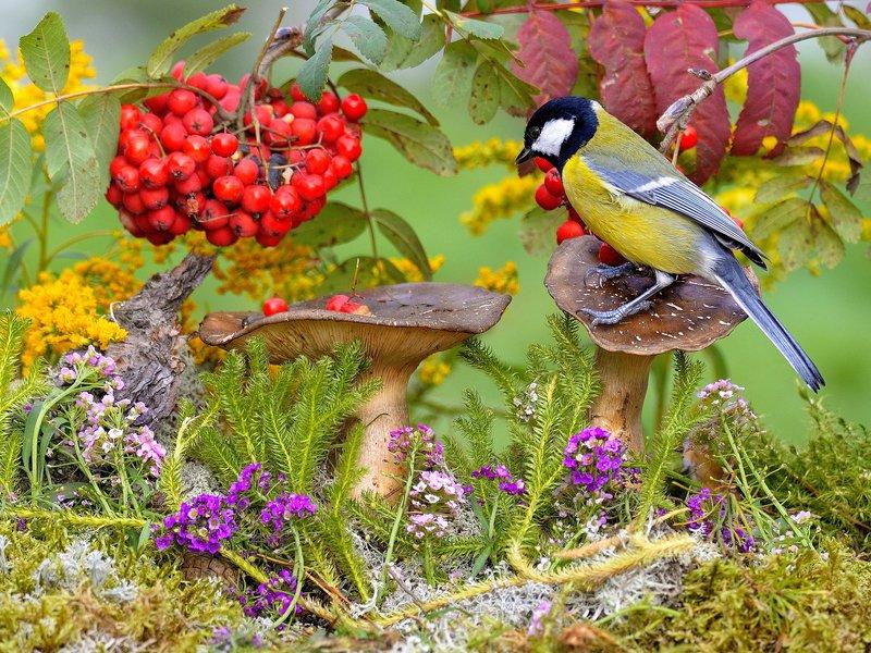 природа, фотоохота,  птицы, животные, осень Осенние птицыphoto preview