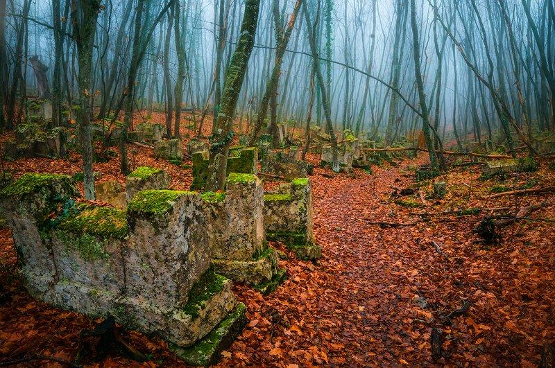 крым,  лес,  пейзаж,  деревья, иосафатова долина, осень, листья Memento moriphoto preview