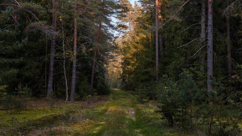Лес, сосны, сентябрь, день, дорога Лесphoto preview