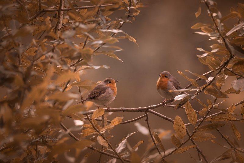 природа, лес, животные, птицы Встречаphoto preview