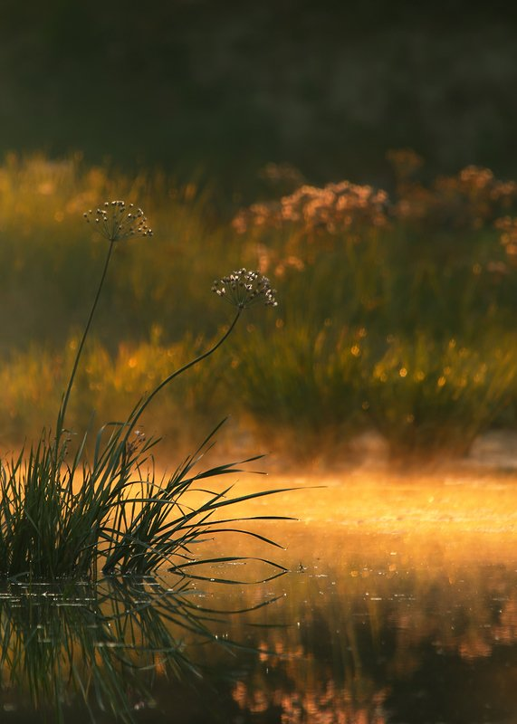 landscape, flowers, nature, water, fog, morning Morning pulsesphoto preview