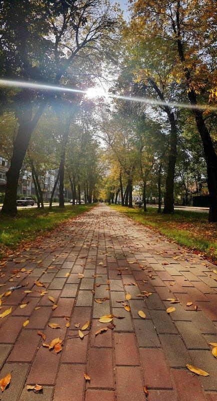 листья, деревья, город, ветки, луч, солнце, красота, осень Осень в городе...photo preview
