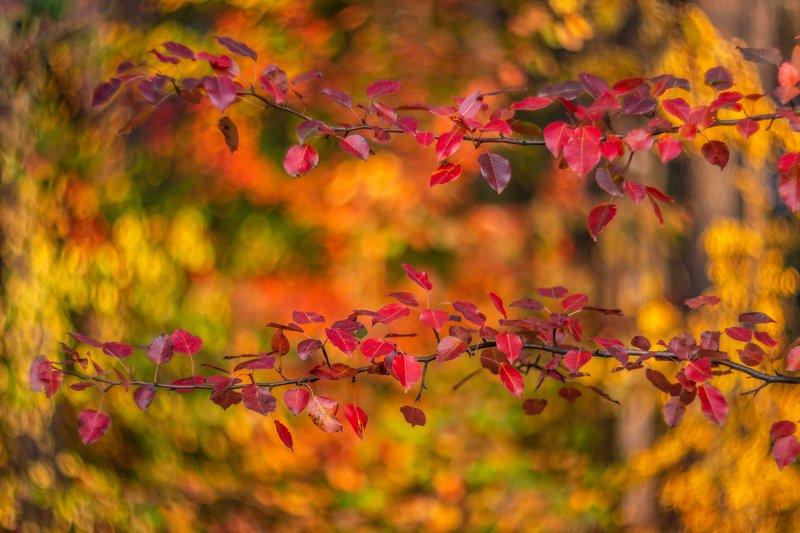 осень Краски осениphoto preview