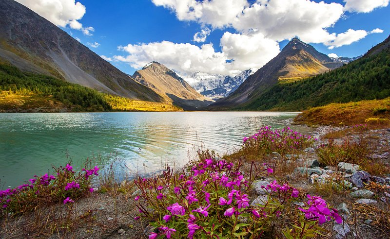 Аккем, горное озеро, Белуха, гора белуха, Алтай, горный алтай, Высочайшая точка алтая, высочайшая точка сибири, вода, горы, цветы Аккемское озеро photo preview