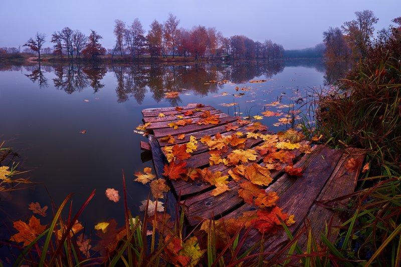 Подмосковье, осень, листья Осень в Подмосковьеphoto preview