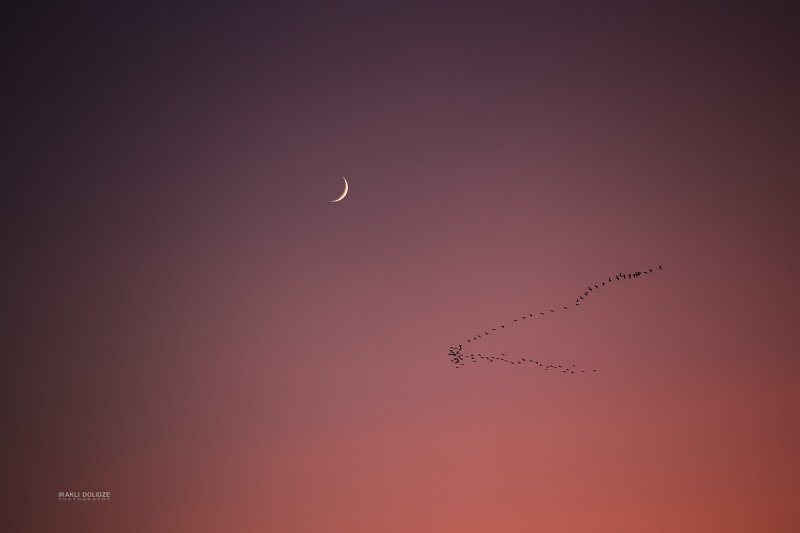 moon, moon set, photography, new moon, canon 6d, canon, good night Today\'s Moonphoto preview