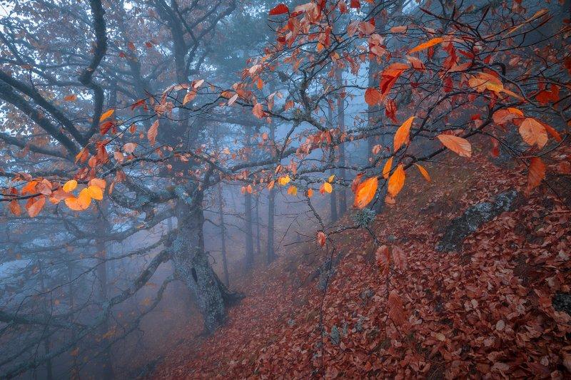 демерджи, крым, лес, бук, осень, туман Хранитель лесаphoto preview