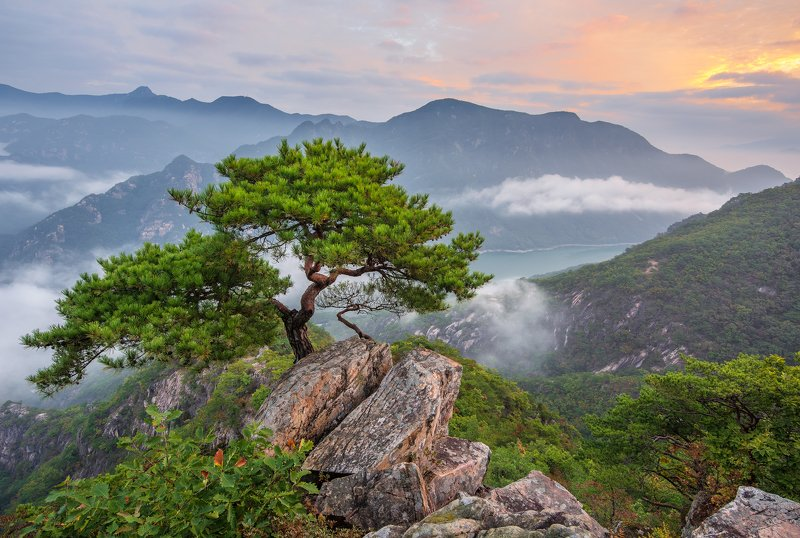 mountains,peak,hiking,fog,clouds,pine,tree,cliff Quiet visitorphoto preview