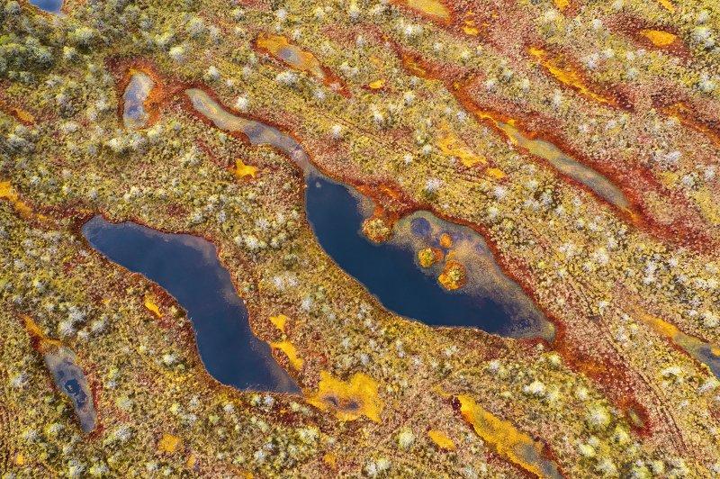 осень, болота Гобелены осенних болот...photo preview