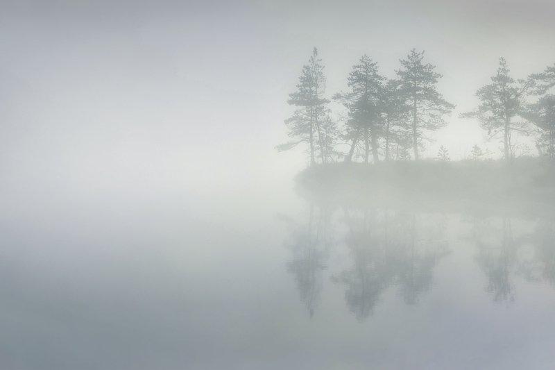болото, кайф, рассвет ,север ,солнце, свет, закат, минимализм, отражение, фототур По утруphoto preview