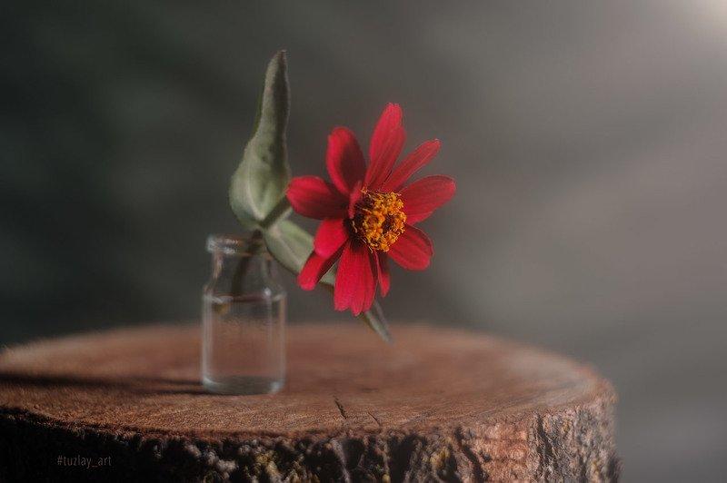 красный цветок, пенек, пень, гелиос 44 Еще про цветочек на пенёчкеphoto preview