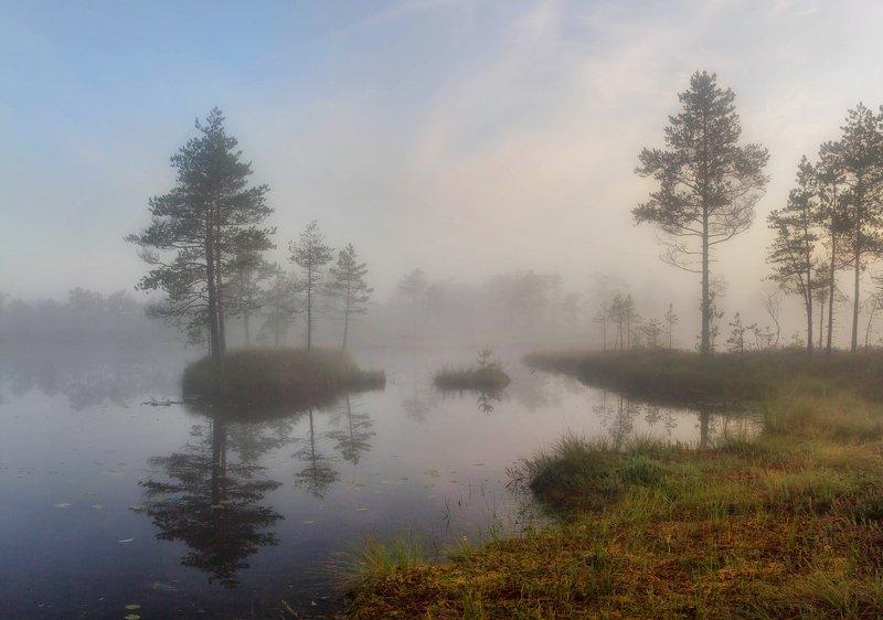 болото, кайф, рассвет ,север ,солнце, свет, закат, облака, отражение, фототур Рассвет на болотеphoto preview