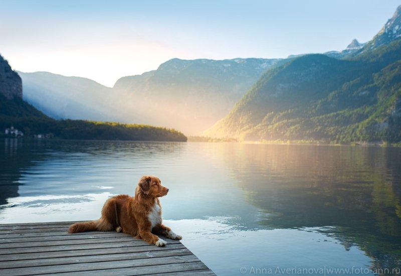 горы, утро, озеро утро на озереphoto preview
