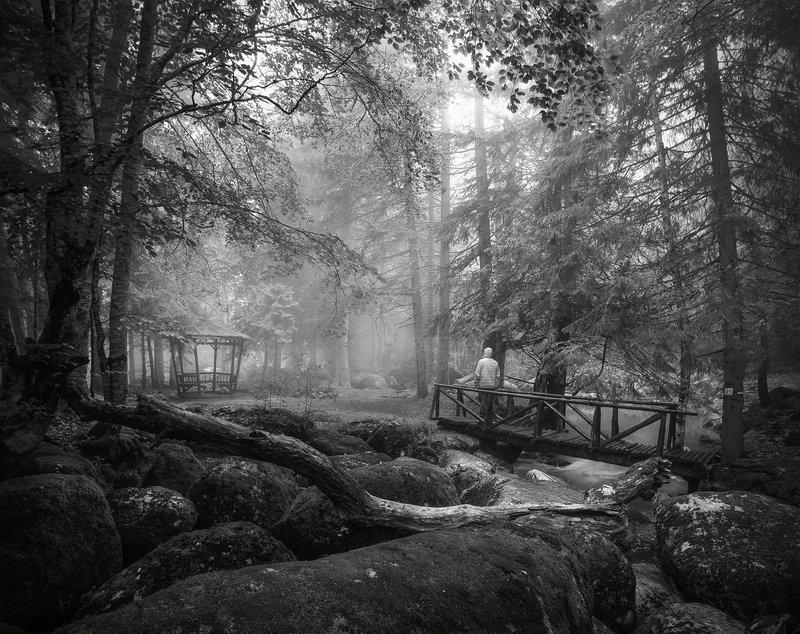 landscape nature scenery forest wood trees mist misty fog foggy mountain bridge vitosha bulgaria туман лес Meetings in the woodsphoto preview