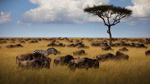Африканские настроения