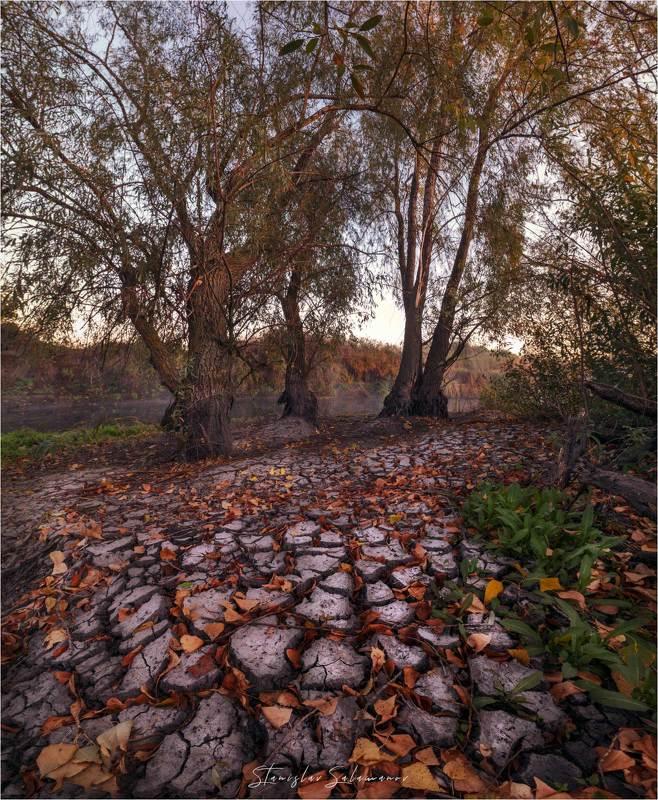 утро, рассвет, туман, осень, осенняя, осенняя пора, пейзаж, дерево, река В ожидании осенних дождейphoto preview