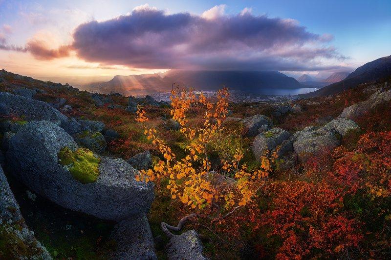хибины, кольский, осень Про извилистое деревце и облако с хвостикомphoto preview