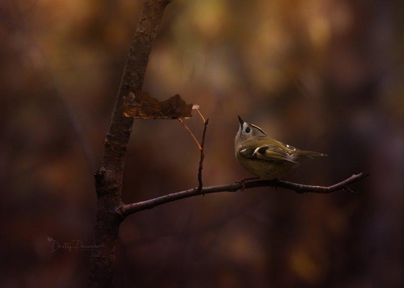 природа, лес, животные, птицы Краски осениphoto preview