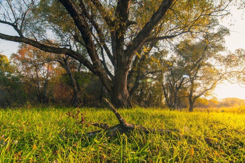 Заливает осень светомphoto preview