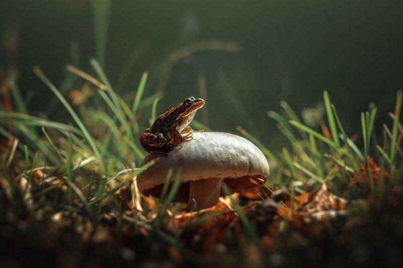 #макро #макромир #лягушка #лес #гриб #осень #macro #frog #nature photo preview