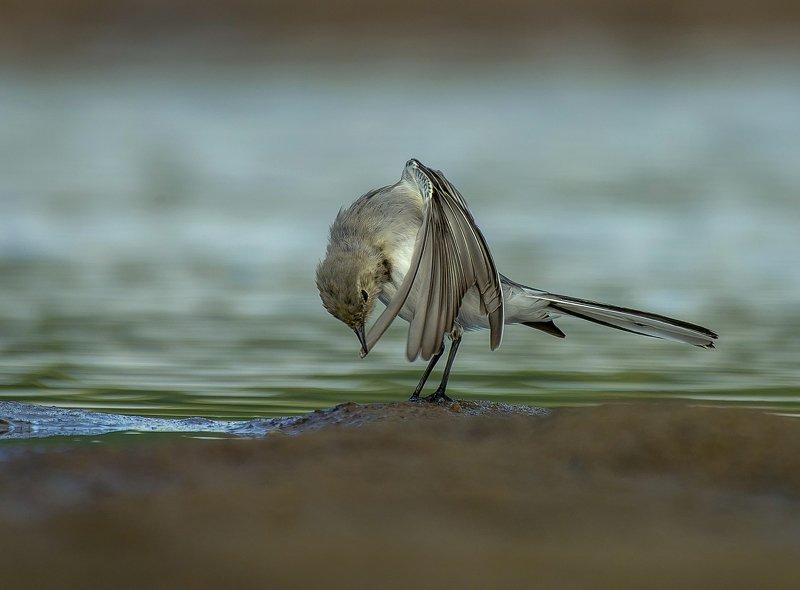 птицы,природа,лето Чистим пёрышкиphoto preview