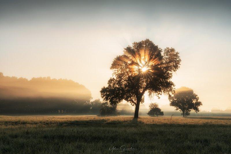 Fog, morning, tree, beams, light Morning Raysphoto preview