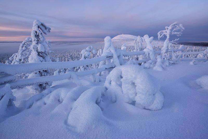 Январский снежок... фото превью