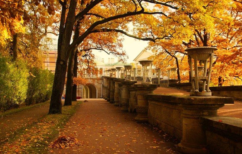 autumn, morning, park, walk, october, mood, alley, осень, утро, парк, прогулка, октябрь, настроение, аллея October morning ...photo preview