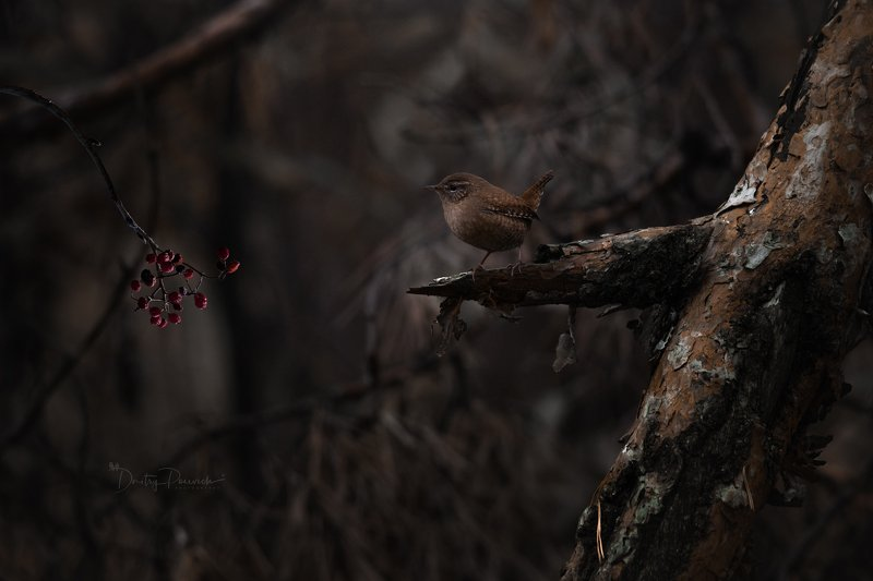 природа, лес, животные, птицы В дремучем лесуphoto preview
