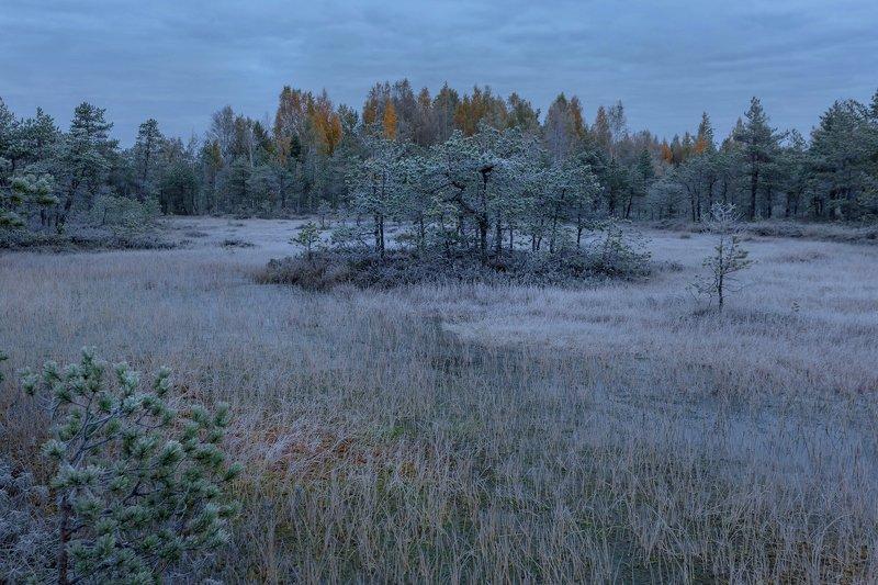 болото, кайф, рассвет ,север ,солнце, свет, закат, облака, отражение, фототур, иней, заморозок Седое утроphoto preview