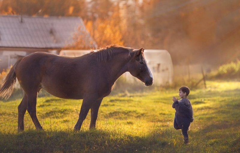 мальчик лошадь деревня знакомство Знакомствоphoto preview